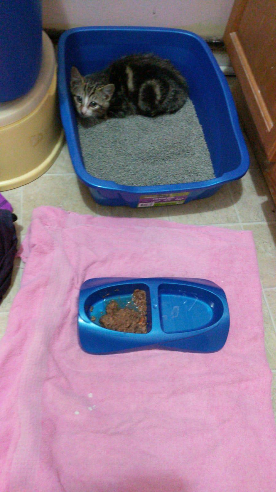 Socialize Feral Kitten Feral Kittens Kittens Baby