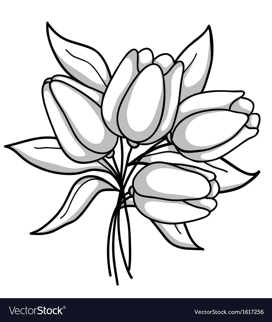 Monochrome bouquet of tulips Black white gray vector image ...