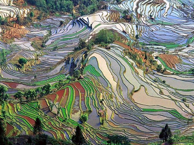 Le terrazze di riso di Yuanyang, Cina