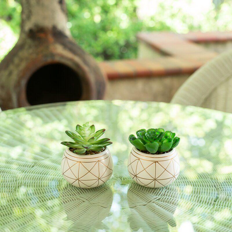 2 Piece Geo Succulent Plant In Pot Set Plants Planting Succulents Succulents Candles