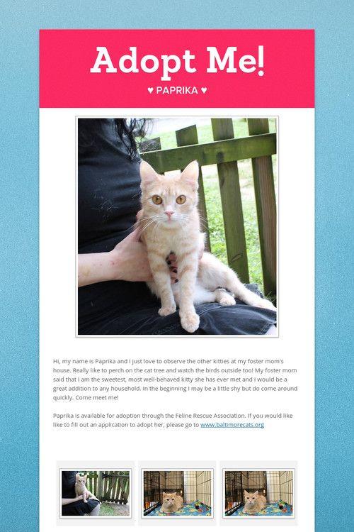 Adopt Me Adoption Cat Adoption Foster Mom