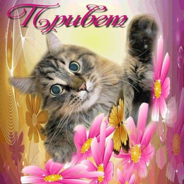 кошки картинки с надписью привет