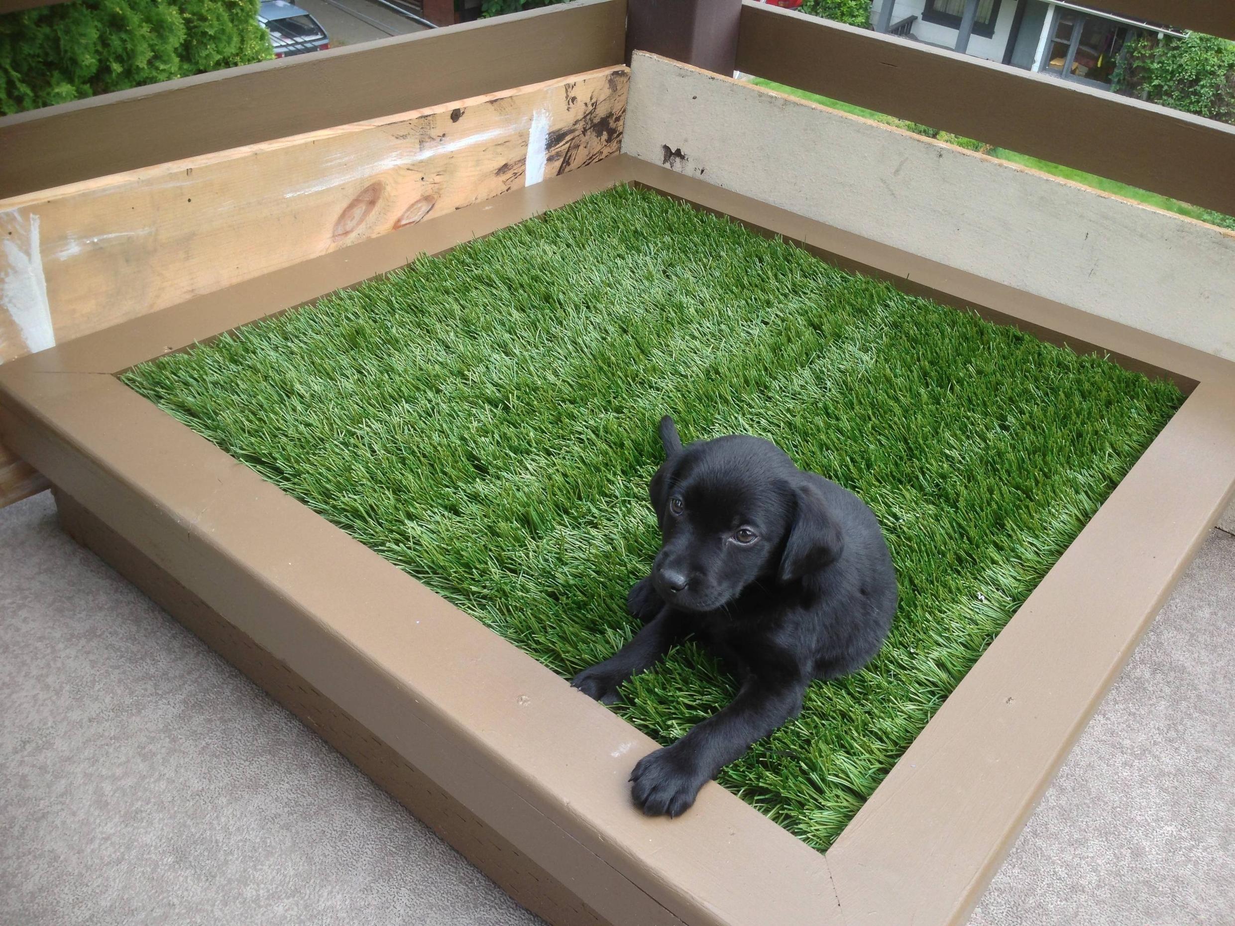 DIY porch potty Indoor dog potty, Porch potty, Dog potty