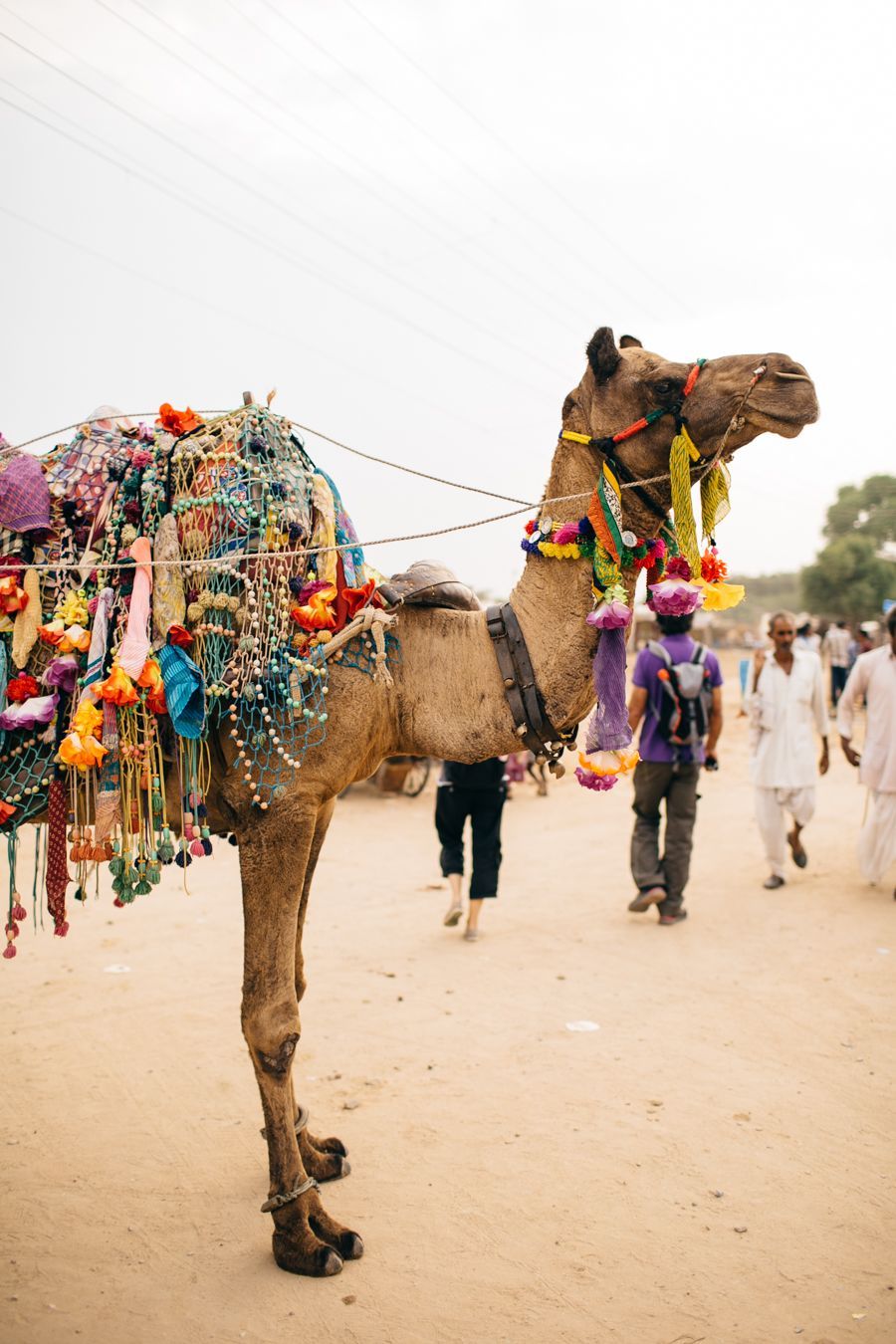 india: photo field trip, jaipur, pushkar camel fair, elephant landing + more… | woodnote photography