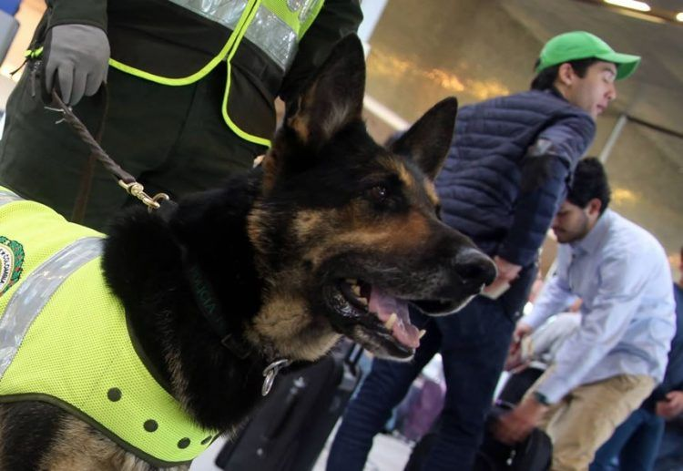 Crazy News On Twitter Dogs Detection Dogs Colombian