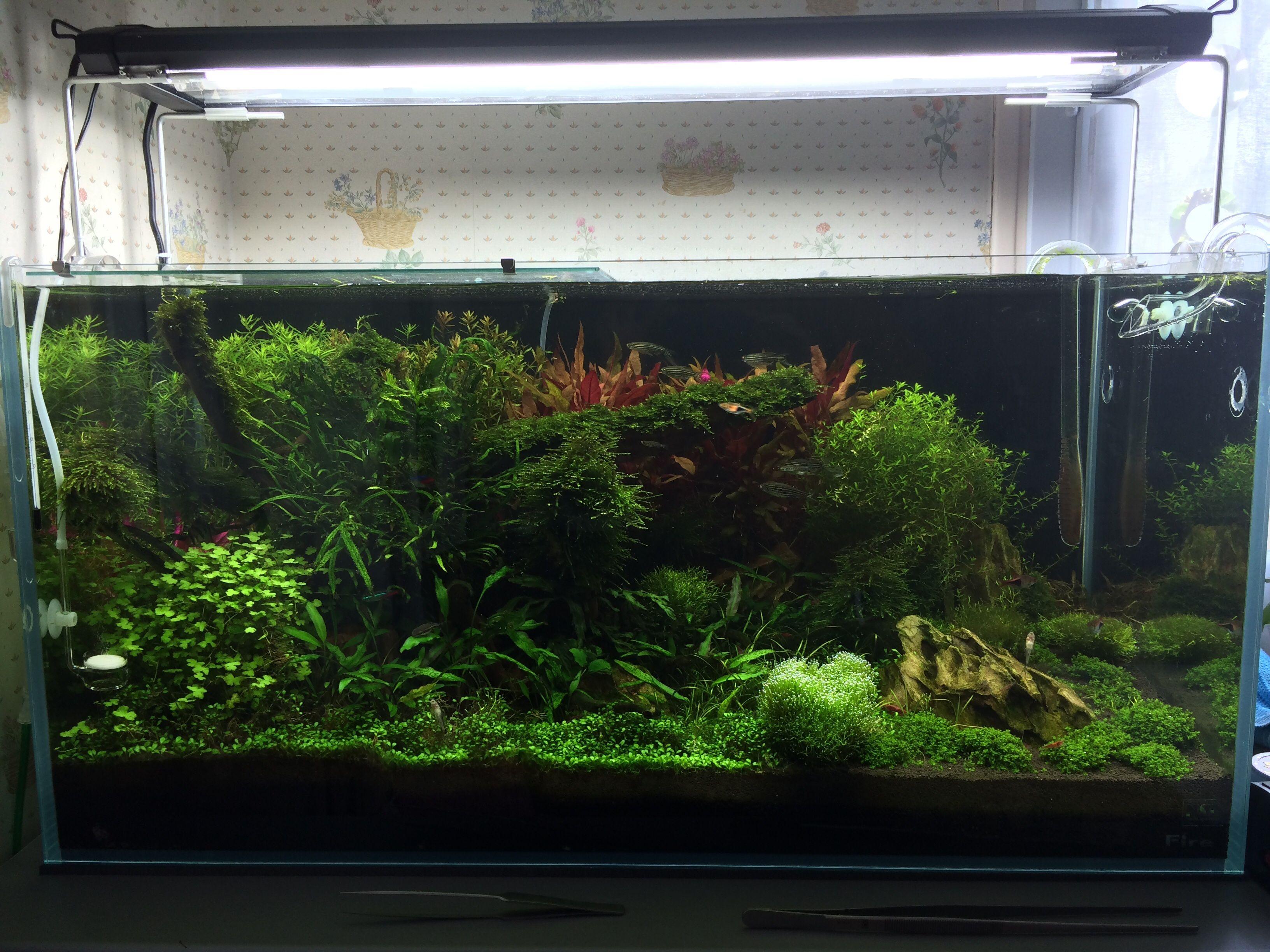 74db2144c0c7cdddacf409a23e7cde46 Luxe De Crevette Aquarium Des Idées