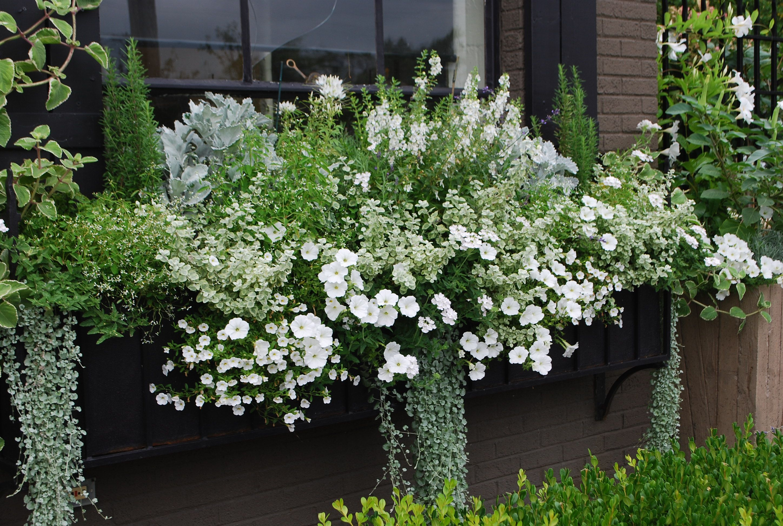 white flowered window box composition de jardini re. Black Bedroom Furniture Sets. Home Design Ideas