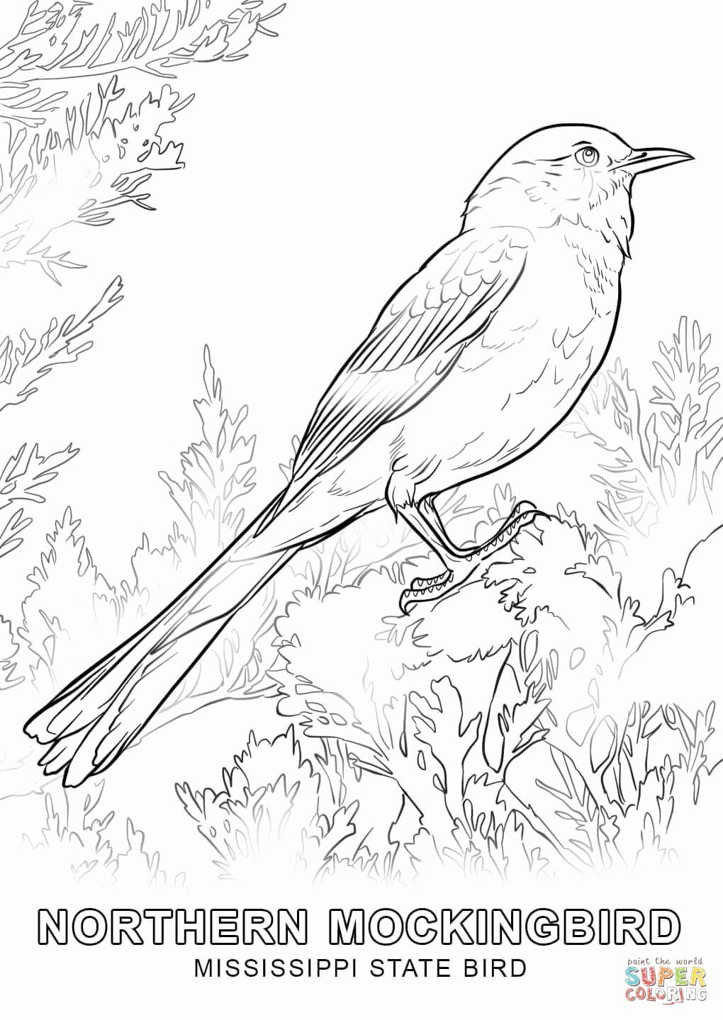 State Flower Coloring Pages Unique Northern Mockingbird Coloring Pages Lovely Mississippi State Florida Michigan Alabama