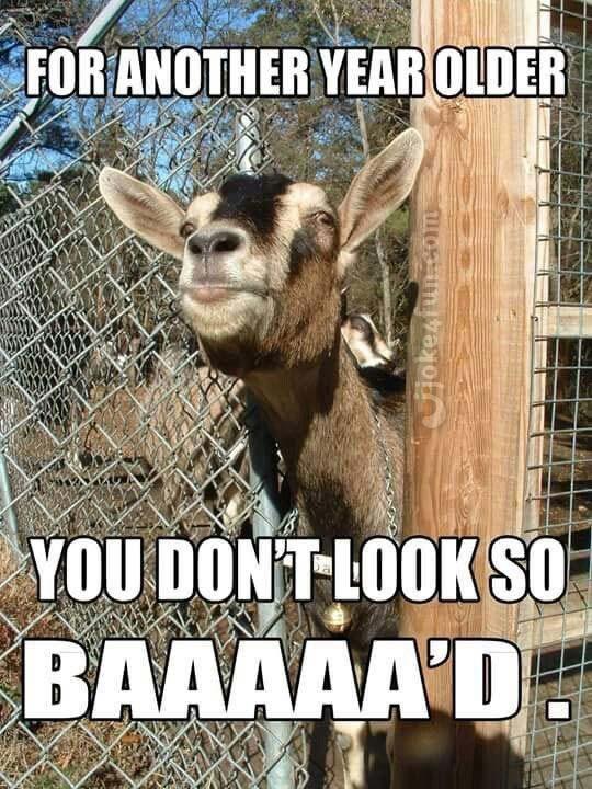 Funny Happy Birthday Meme Birthday Wishes Funny Happy Birthday Meme Happy Birthday Goat