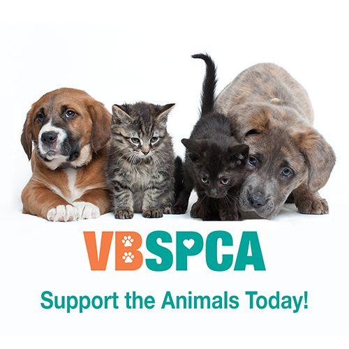 Spca Es Un Gran Programa En Los Estados Unidos A Ayudar Animales