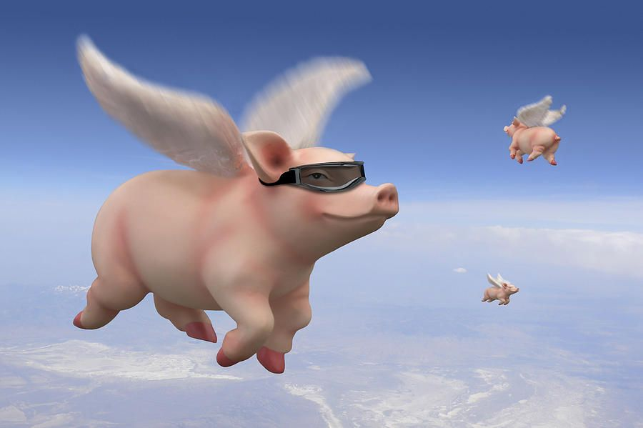 Image result for flying pigs pics