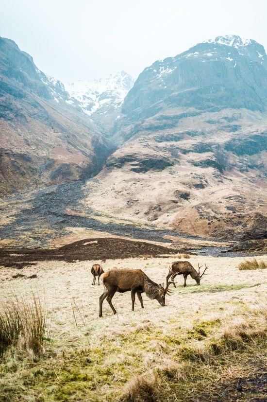 Glen Coe et Loch Lomond : Road trip en Écosse - Blog voyage #lochlomond
