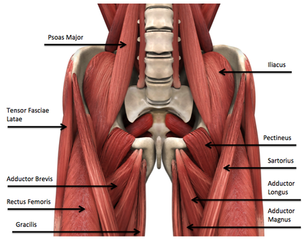 The Supine Groin Stretch Posture Exercise Returns Your Pelvis To A