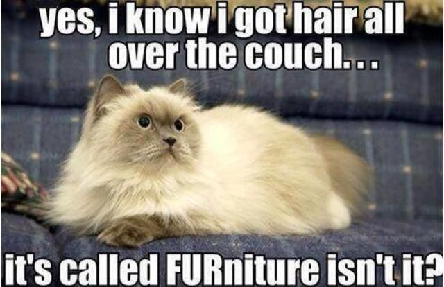 You Can Haz Memes? 31 Hilarious Cat Memes From Around The Internet (Slide #32) - Pawsome