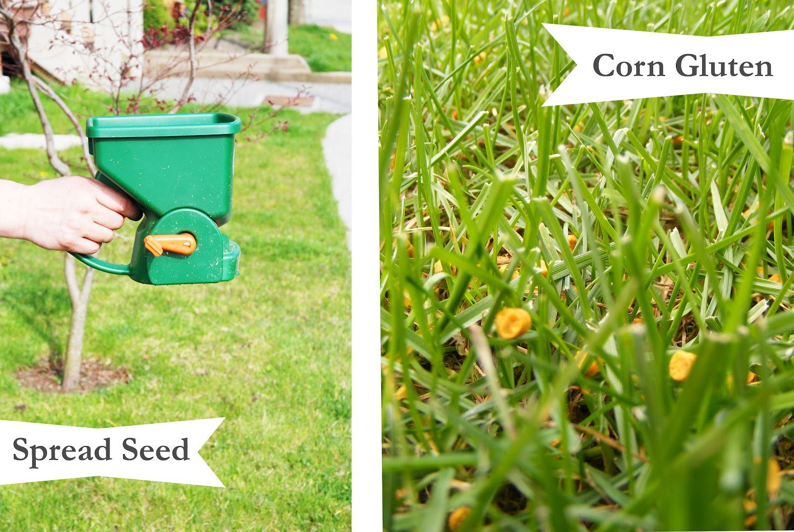 Organic Lawn Care To Keep Baby And Dog Safe From Pesticides With Images Organic Lawn Care Organic Lawn Lawn Care