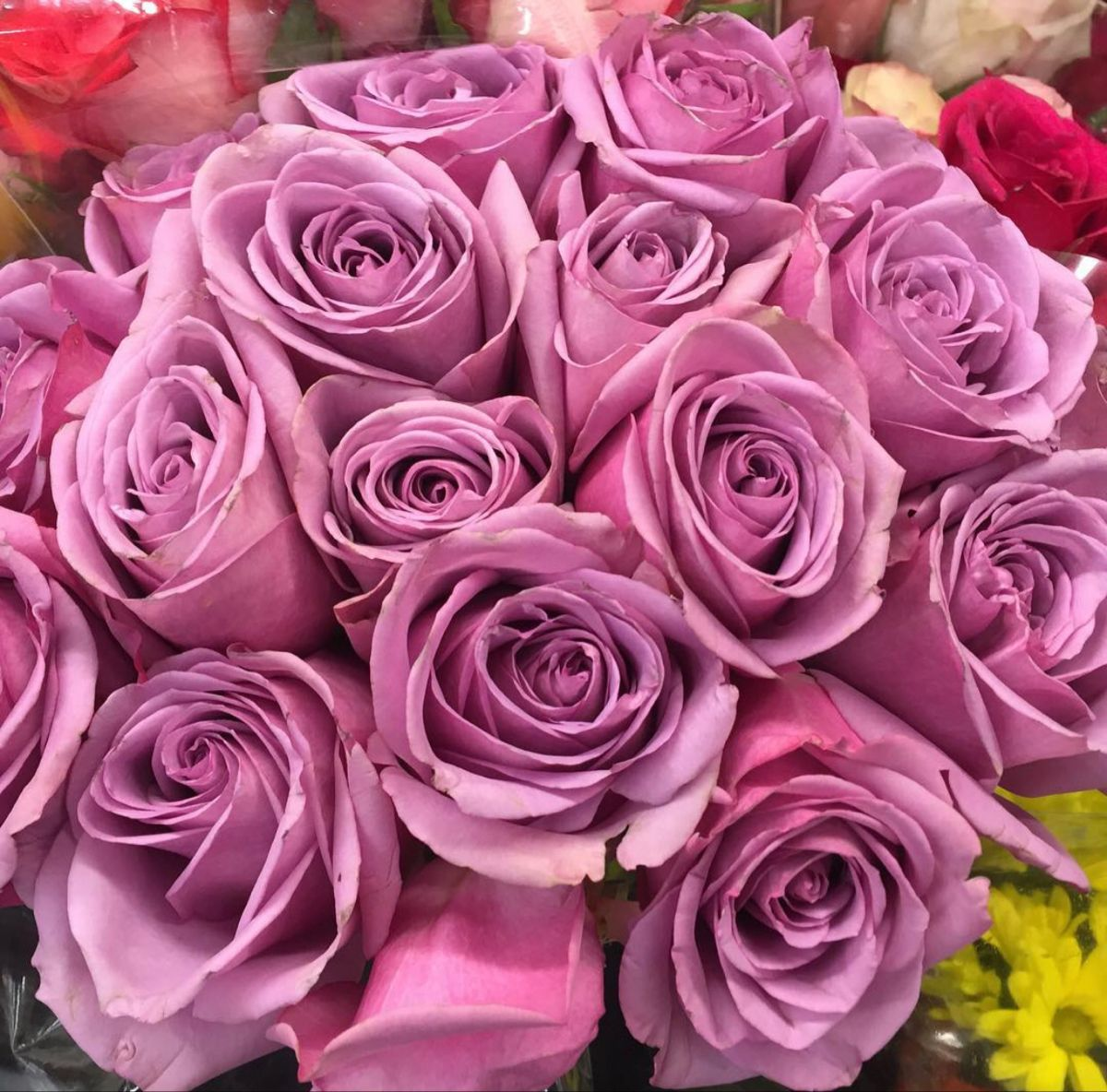 Lavender Roses In 2020 Bulk Flowers Online Wholesale Flowers Ordering Roses