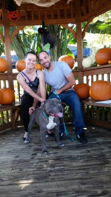 Gunner Was Adopted This Past Week By A Couple Who Fell Instantly In Love With Him The Humane Society Of Tampa Bay In Humane Society Dog Lovers Homeless Dogs