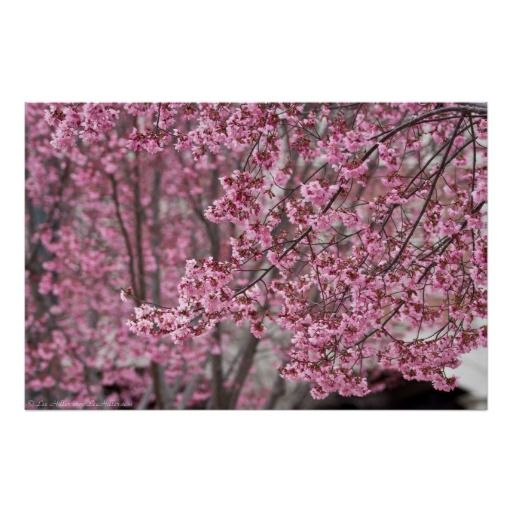 The Magick Of Cherry Blossoms Cherry Blossom Branch Most Beautiful Flowers Beautiful Flowers