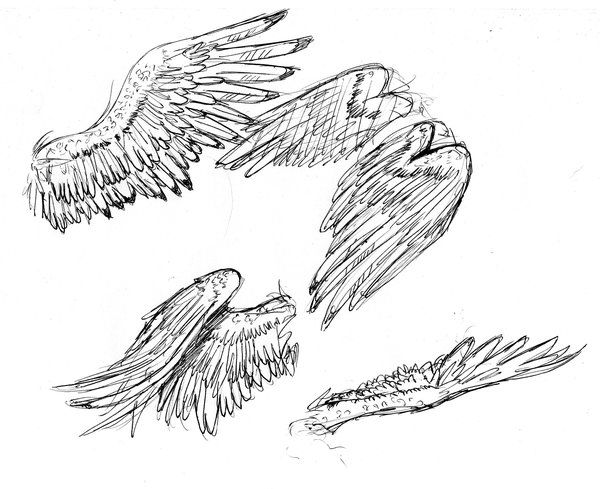 Bird Wings by arvalis | Drawing angels | Pinterest | Bird ...