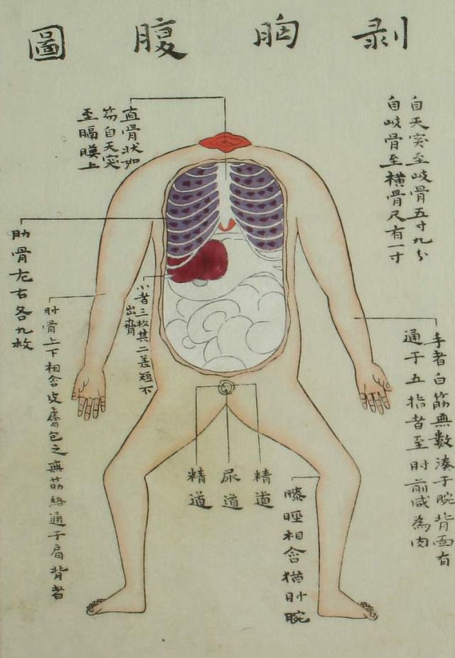 Illustration from 1759 edition of Zōzu The actual carving was done - medical charts