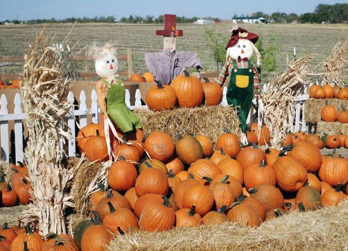 North Texas pumpkin patches Texas Pinterest Pumpkin patches - last min halloween costume ideas