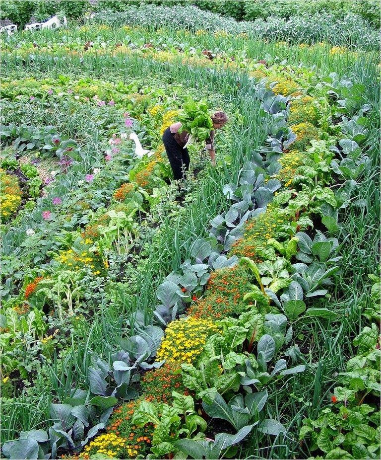 40 Best Beautiful Vegetable Gardens Ideas That Will Amaze