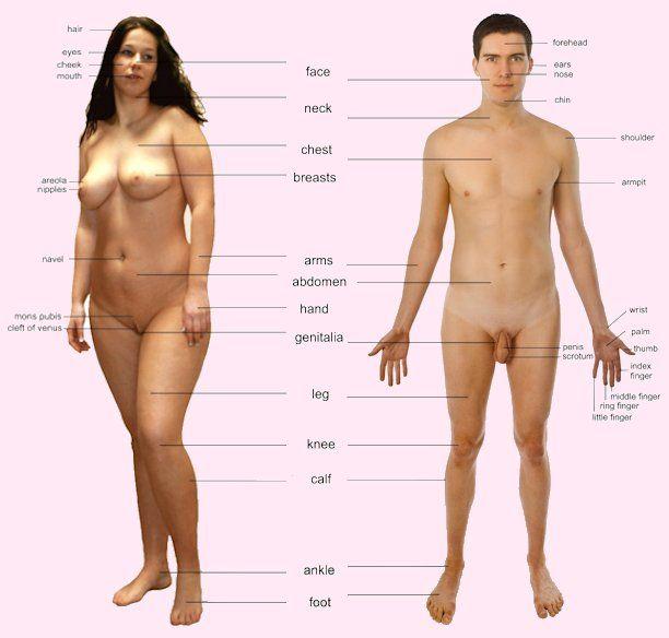 Transgender body structure-7140