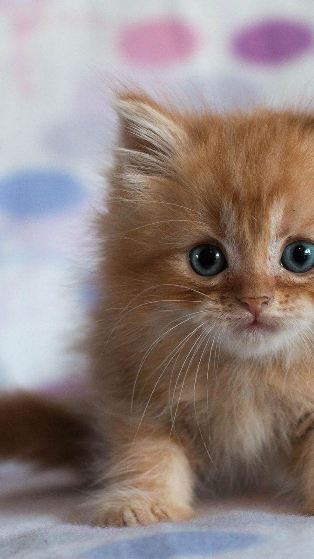 Kitty Cat Collection See All Wallpapers Wallpapers Background Animals Cat Pics Hd Cat Wallpaper Funny Cat Wallpaper