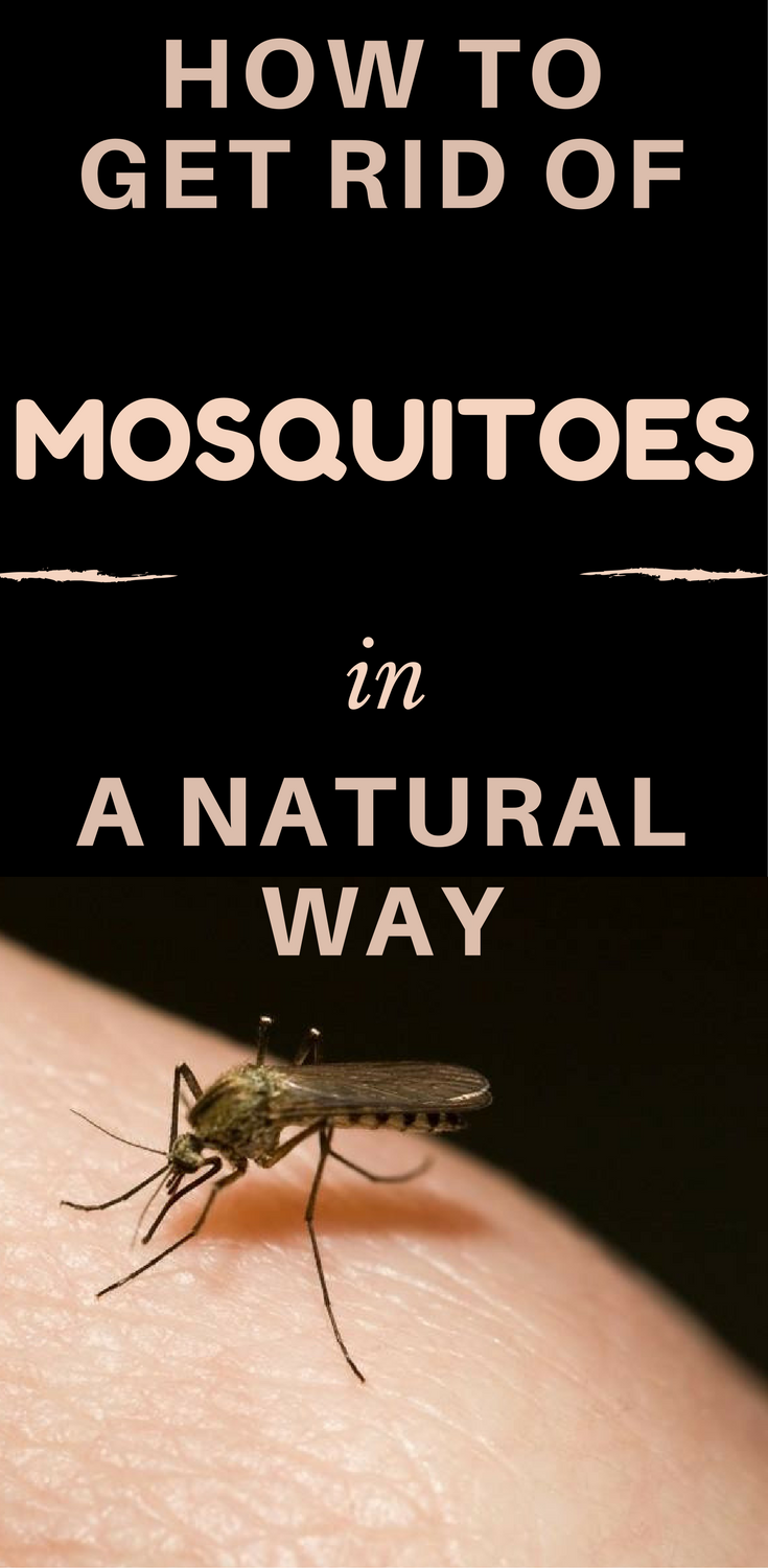 How To Get Rid Of Mosquitoes In A Natural Way With Images Home