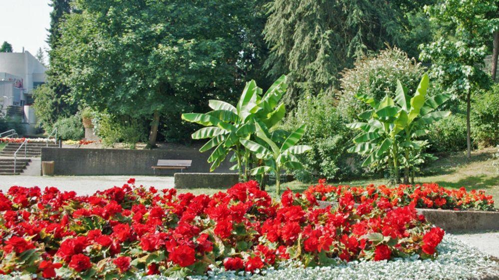 Deutsch Franzosischer Garten Landeshauptstadt Saarbrucken Plants