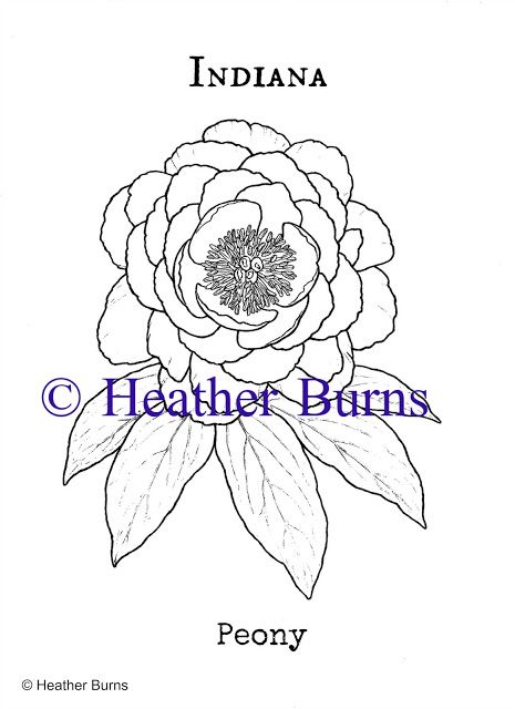 Indiana State Flower Peony State Flower Coloring Book Pinterest