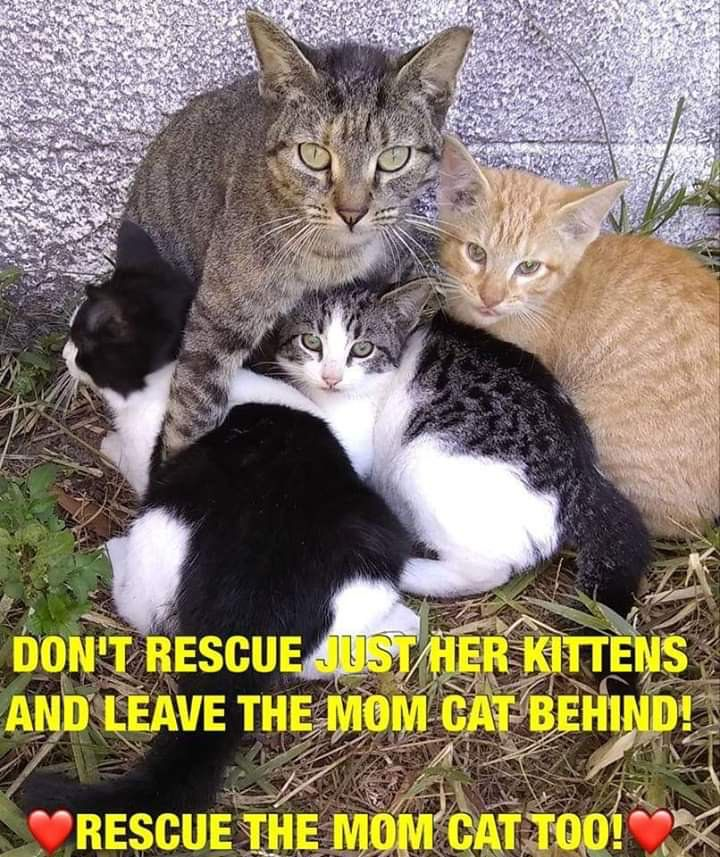 Pin By Elizabeth Moini On Animal Rescue Feral Cats Kittens Cats