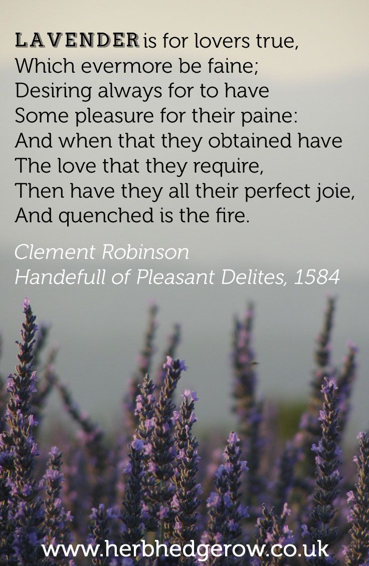 Lavender Is For Lovers True Which Evermore Be Faine Desiring Always For To Have Some Pleasure For Their Paine And When Th Lavender Quotes Herbalism Lavender
