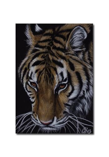 TIGER 44 portrait big cat feline pencil painting Sandrine Curtiss Art Limited Edition Print ACEO by Sandrinesgallery