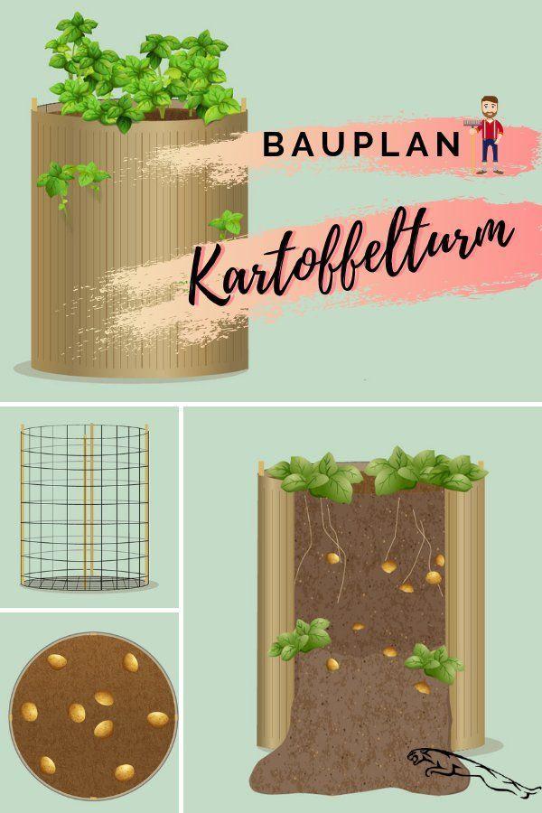 Pflanzen Topf Panosundaki Pin