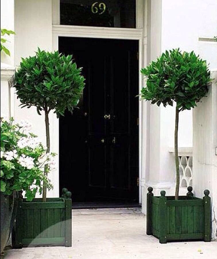 Front Door Topiary: Laurus Nobilis, Front Door Images