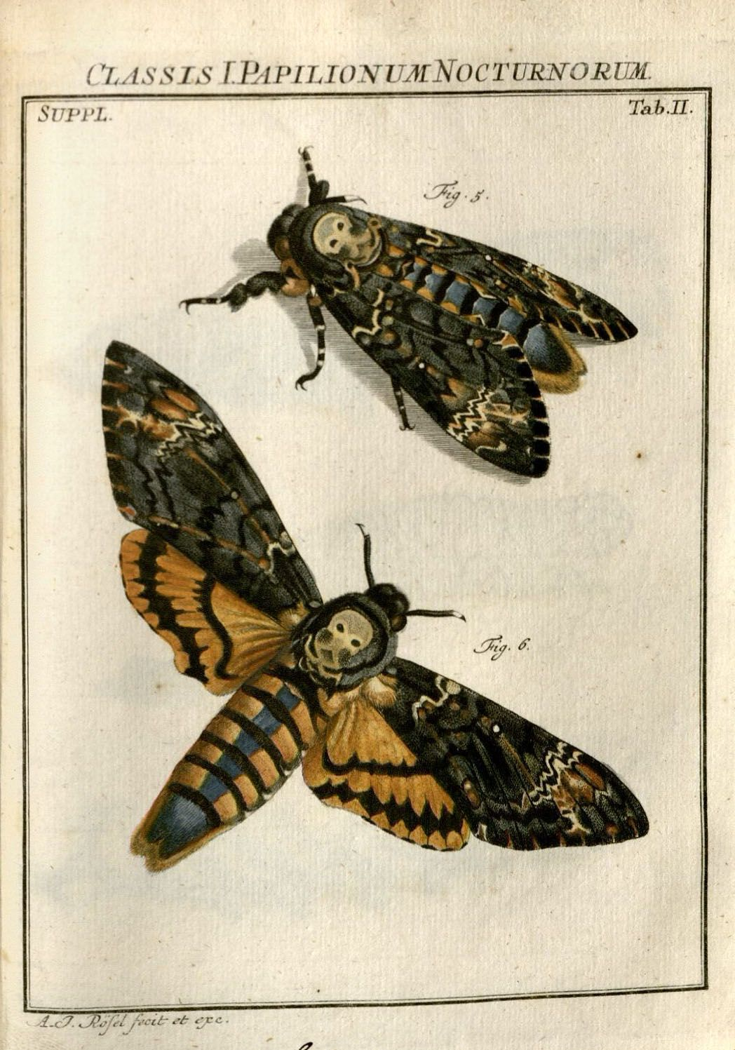 être dans la lune | cositas | Pinterest | Insectos, Taxonomia y Dibujar