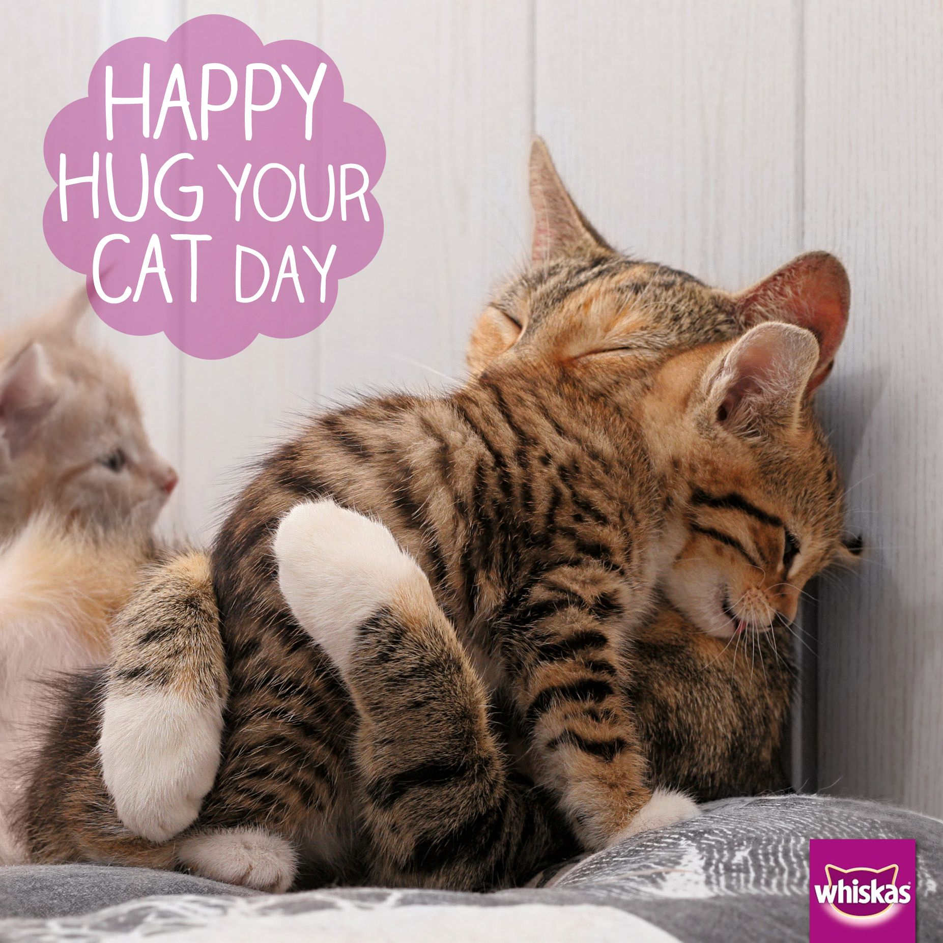 Happy Hug Your Cat Day Sounds like a purrfect excuse for a few