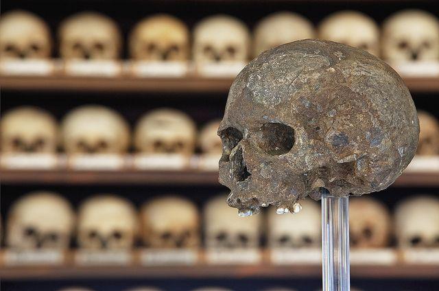 Schädel von Lautsch | Top 100 nhm Wien | Skull