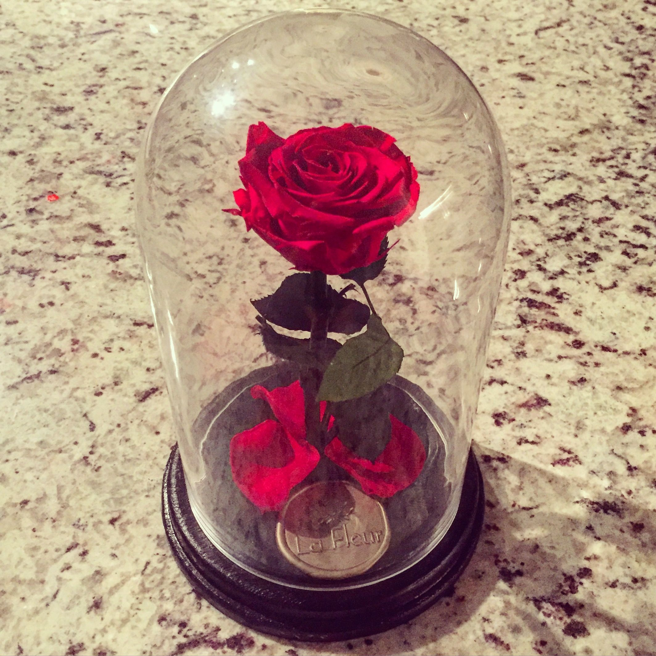 The Eternal Rose Is A Real Red Preserved That Will Last Up To One Year Without Water For Custom Colors Please Send Us Message On Contact