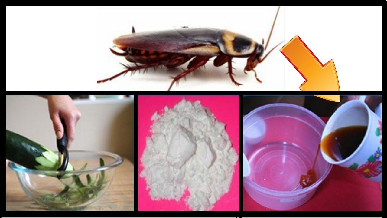 How To Get Rid Of Cockroaches Permanently And Fast In Kitchen Cabinets Natural Remedies Health Home Remedies For Roaches Natural Remedies