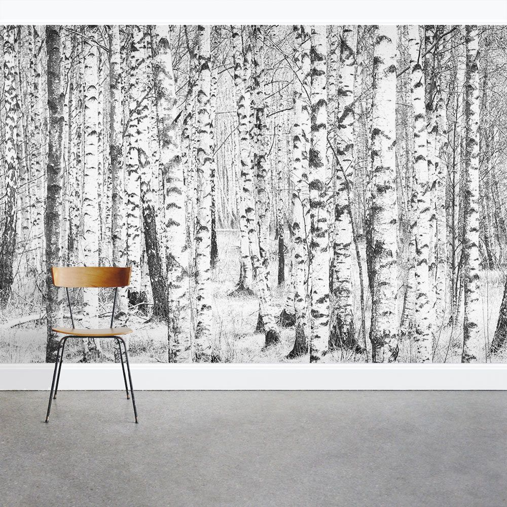 Winter Birch Trees Wall Mural Kings wood in 2019 Wall