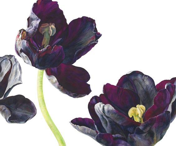 Zwarte Tulpen.  Paul Scheerer