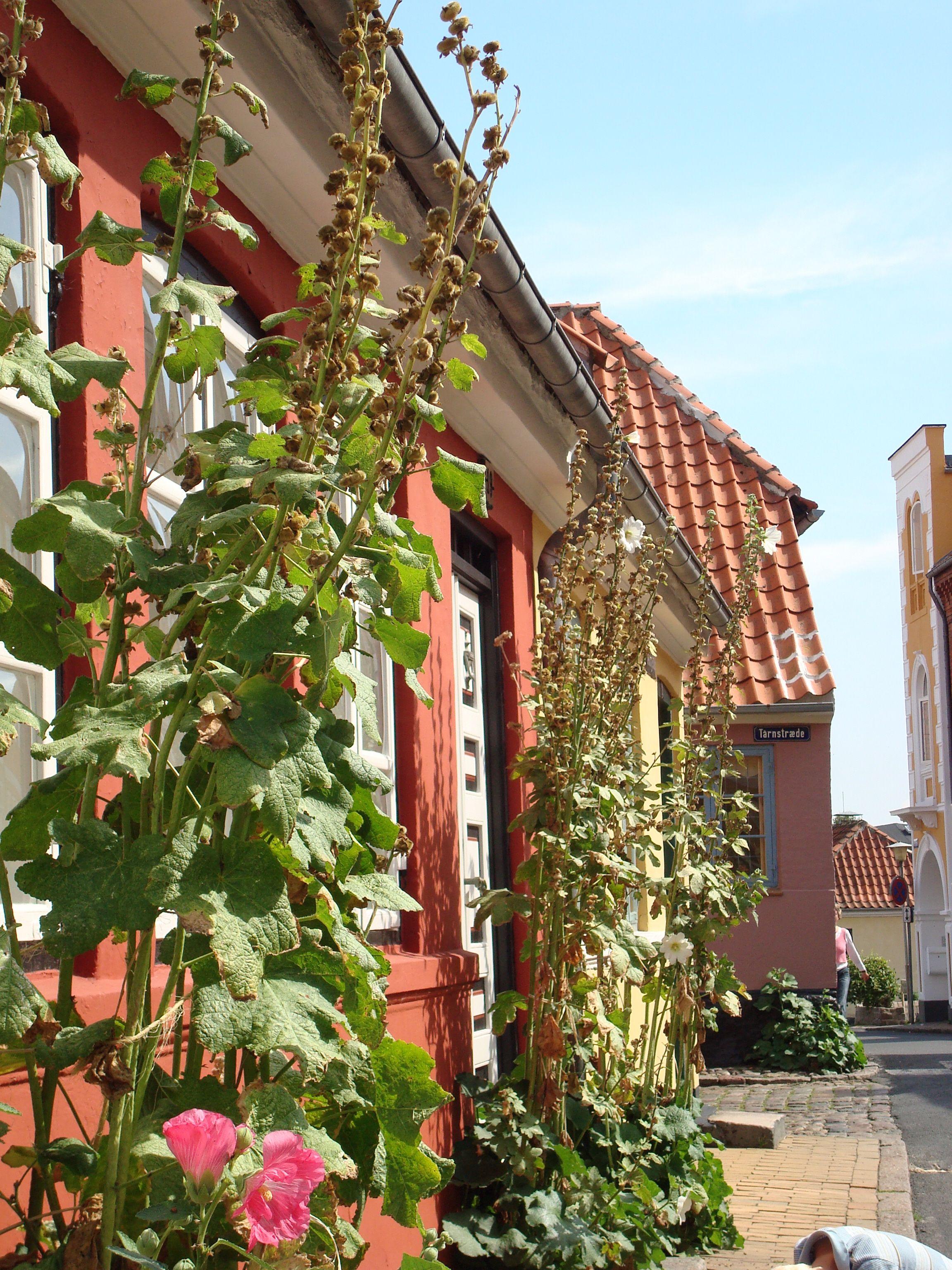 Odense - idyl. Odense er altid spændende at gå på opdagelse i #visitfyn