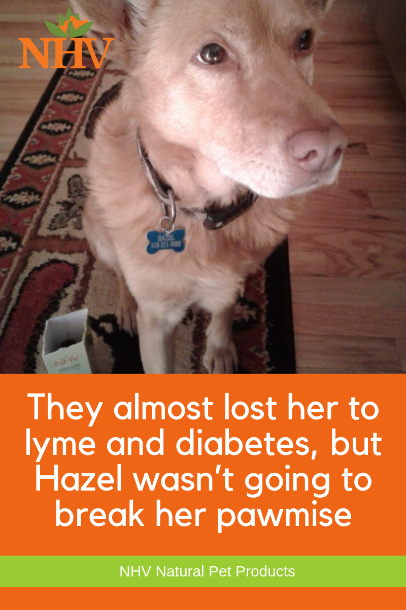 They Almost Lost Her To Lyme And Diabetes But Hazel Wasn T Going