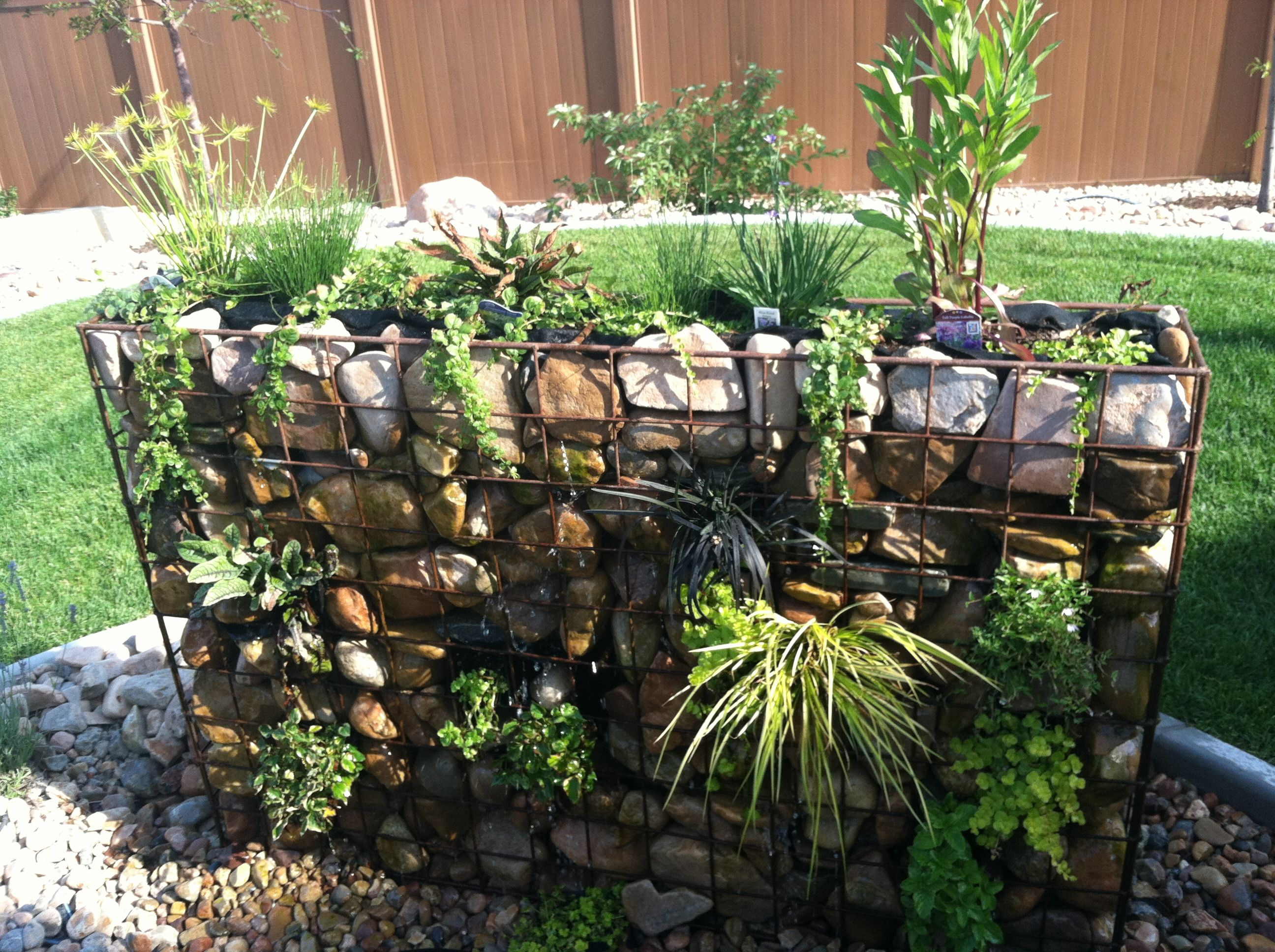 Gabion Wall Water and Plant Feature. i'm planning on building one of these in the shade, taller and narrower. it will have a small goldfish pool under it and a pump to send the water to the top to trickle down over the mosses and babies tears.