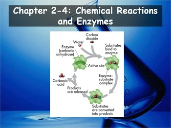 Biology - (2 4: Chemical Reactions and Enzymes PPT and