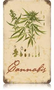 Repined-5280mosli.com -Organic Cannabis College-