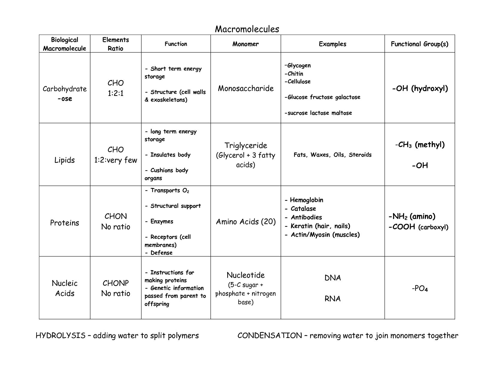Graphic Organizer Macromolecules Chart