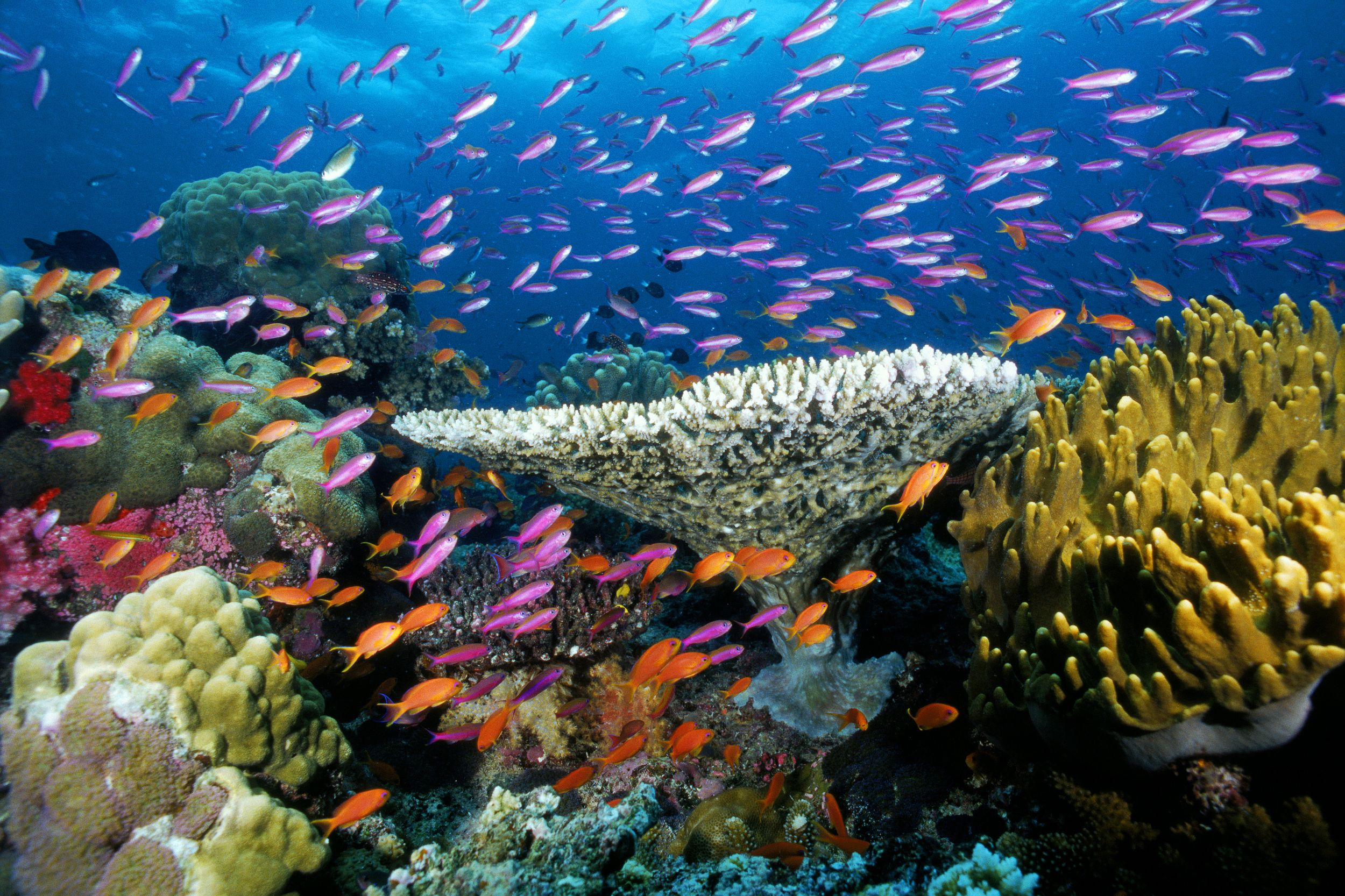 Beautiful-Coral-Reef-Fish-picspaper-com.jpg (2500×1666 ...